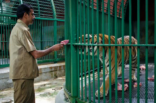 animal cruelty in zoos