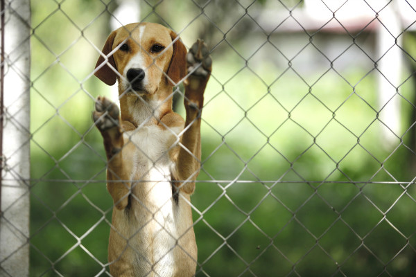 animal experimentation doesn't help us
