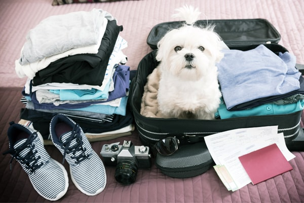 Pet Vacations: The Best Hotels and Stay-Cations for your Pets